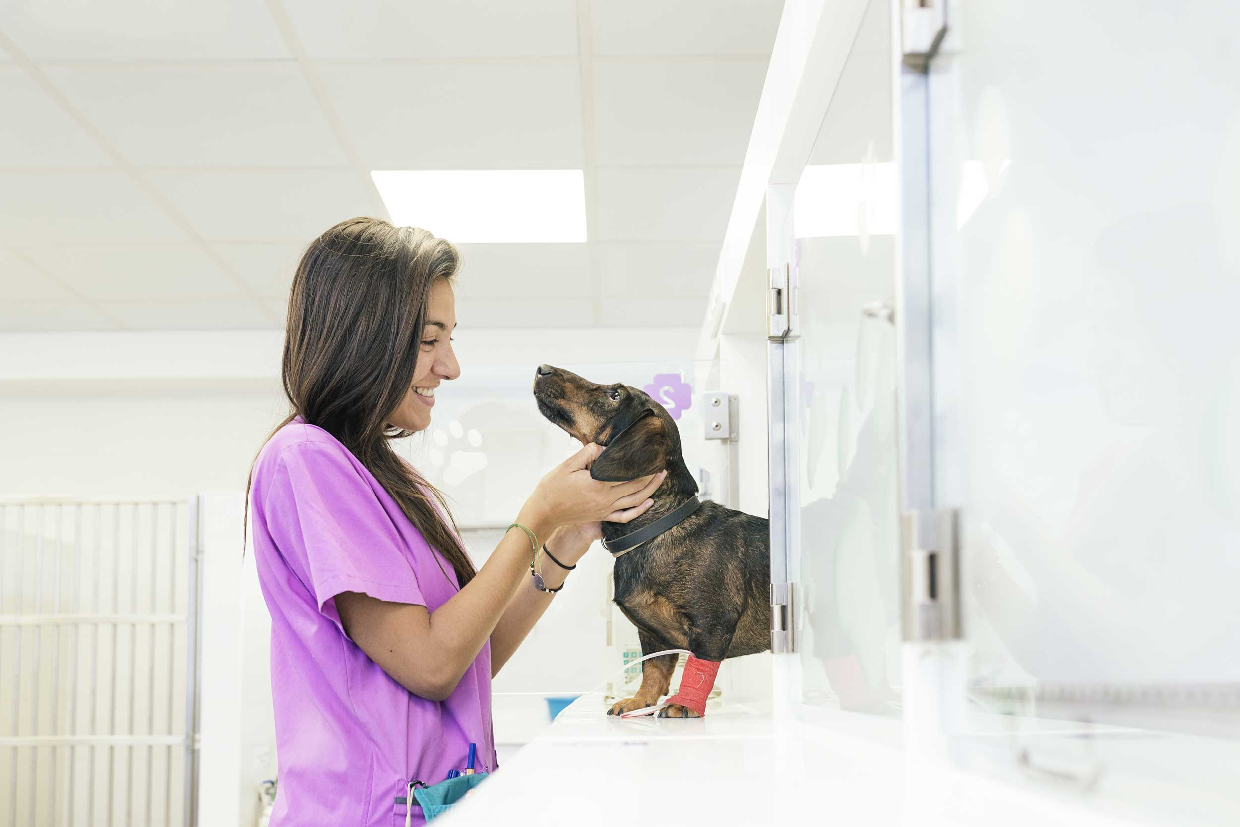 Top Animal Care Careers to Pursue